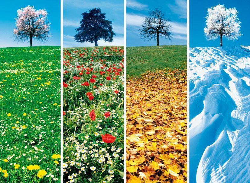 Prévention – Les traitements saisonniers